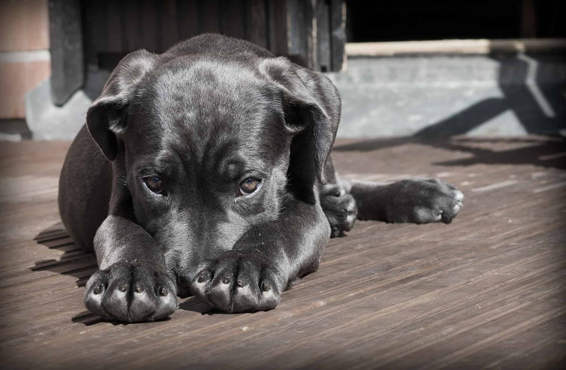 Consejos para la adquisición responsable de una mascota - Veterinarium