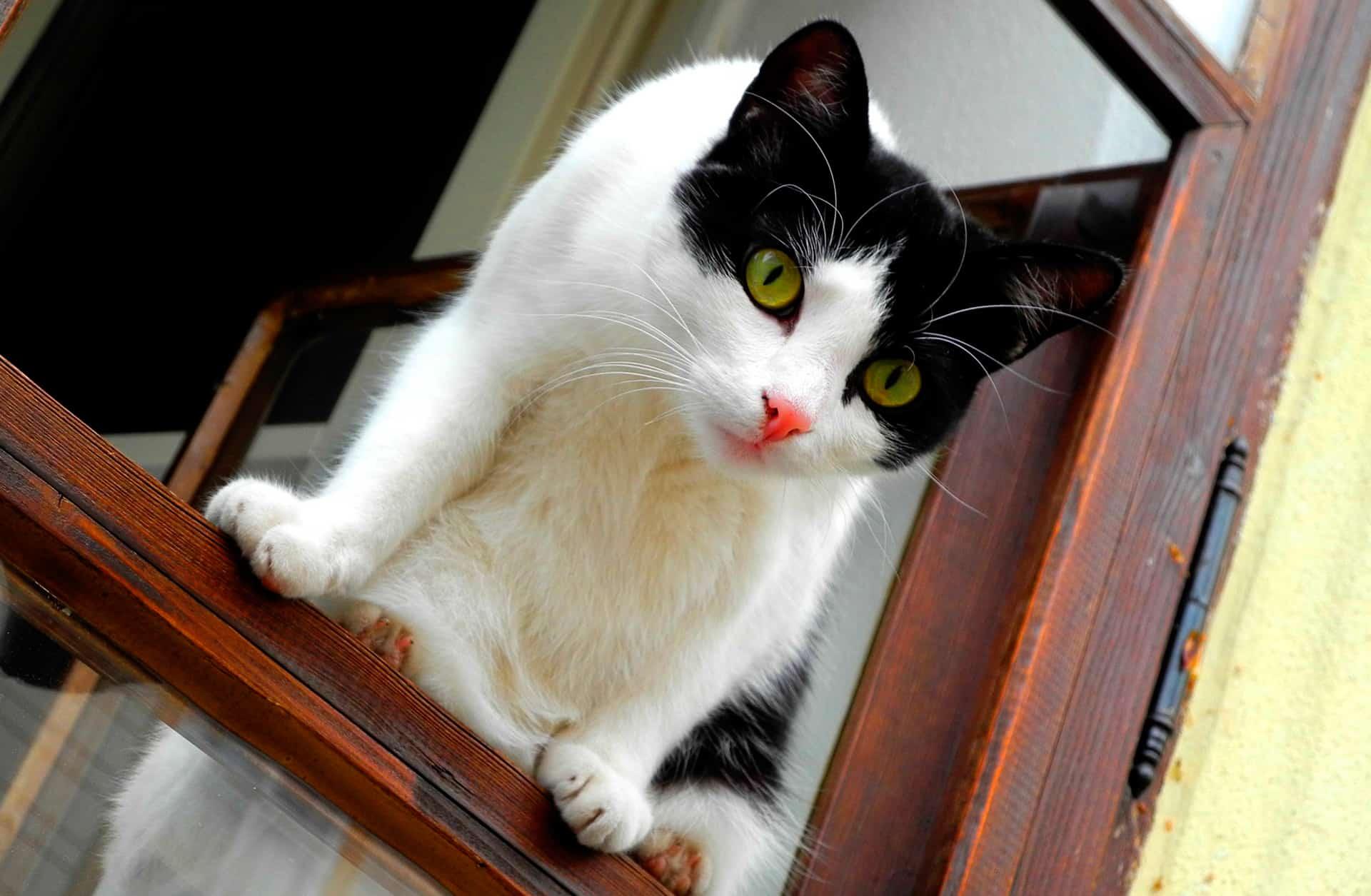 Ventanas abiertas, gatos en riesgo - Veterinarium