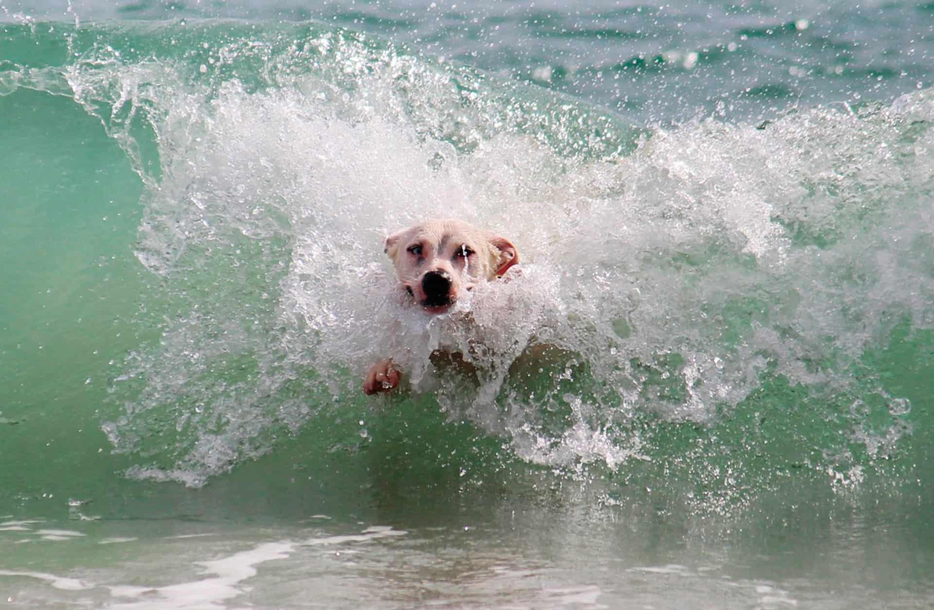En verano, cuidamos de nuestro pelo... y del de nuestro perro ¡también!