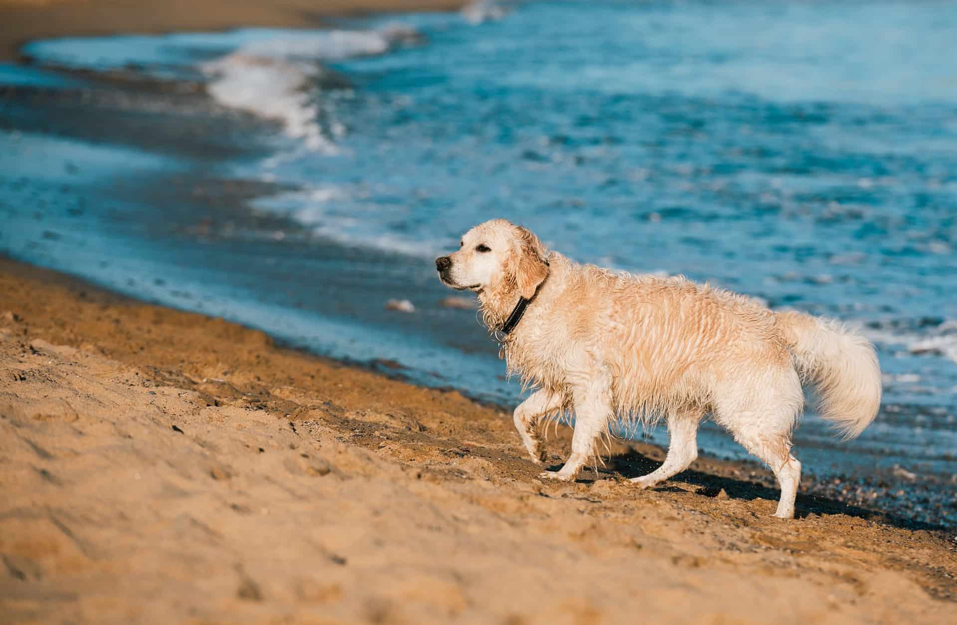 En verano, cuidamos de nuestro pelo... y del de nuestro perro ¡también! - Veterinarium