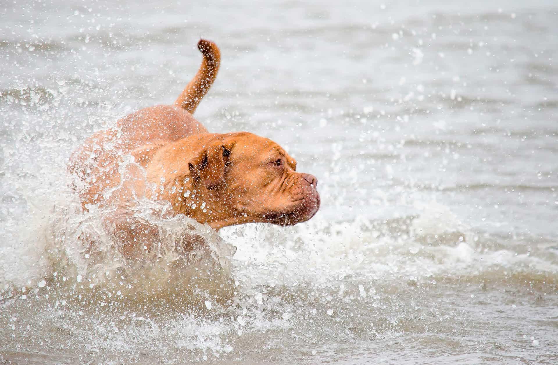 ¿A qué playas podemos ir a disfrutar con nuestro perro dentro del territorio español? - Veterinarium