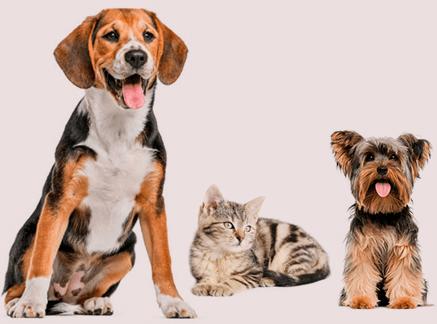 Salud e higiene bucodental - Veterinarium
