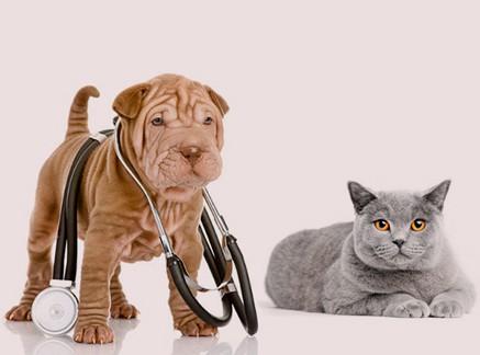 Foto Chequeo Canino y Felino