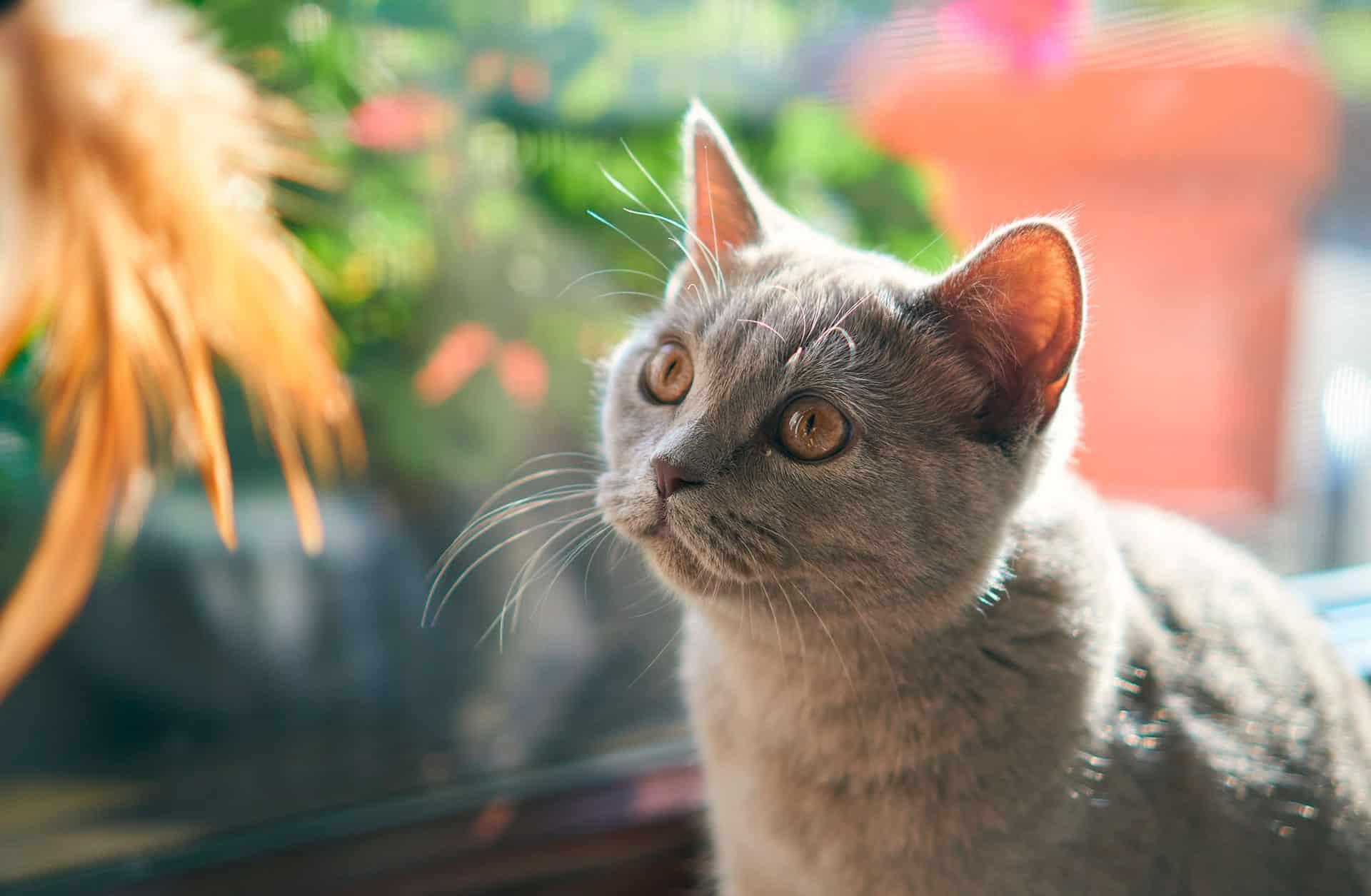¿Cuál es la forma correcta de darle una pastilla a un gato? - Veterinarium