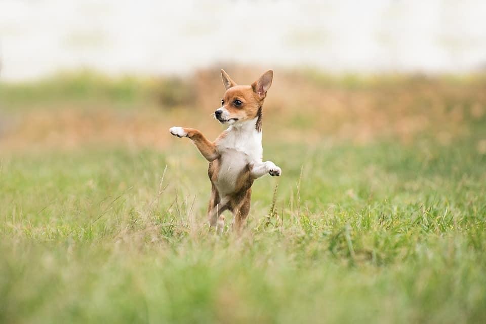 Importancia del juego en perros