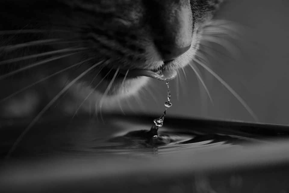 Mi gato bebe mucha agua, ¿ qué le puede suceder?