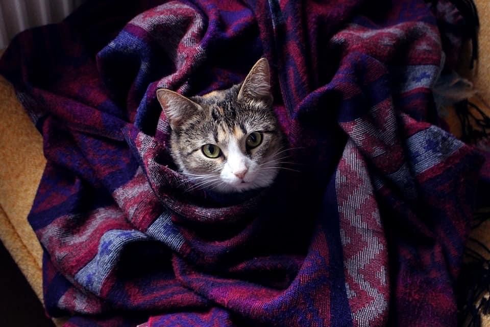 Consejos proteger a tu gato del frio